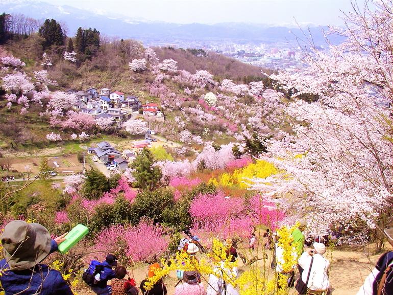 hanamiyama8.jpg