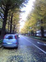 世田谷公園近くのいちょう並木