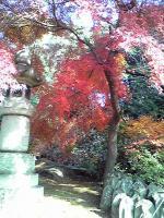 世田谷のお寺で撮影