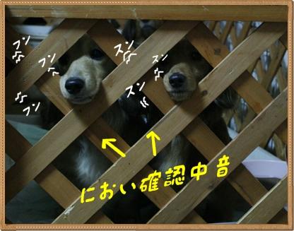 _MG_7720_20120413042334.jpg