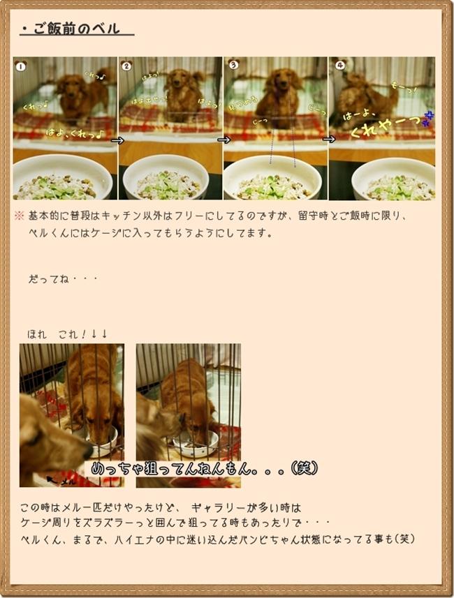 cats_20110430024300.jpg
