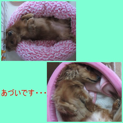 cats_20110627191917.jpg