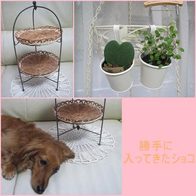 cats_20110627194134.jpg