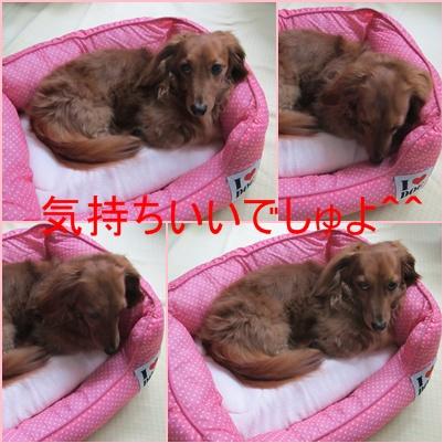 cats_20110709175419.jpg