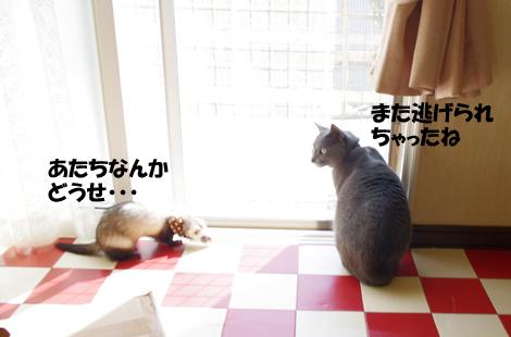 2011040805.jpg