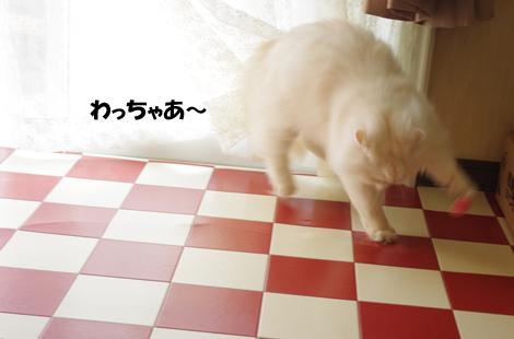2011041603.jpg