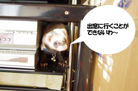 2011050106.jpg