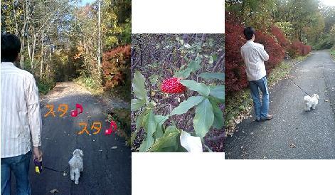 お散歩3連