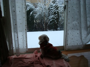 雪見ちーず