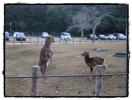 奈良公園4