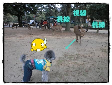 奈良公園2