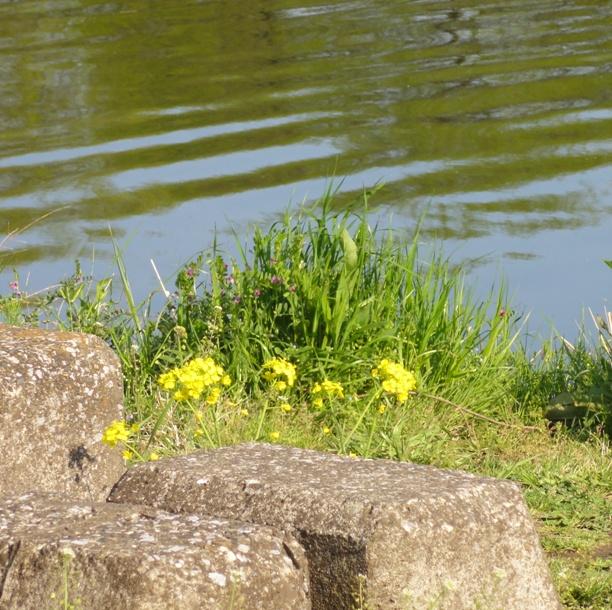 2011-4-20草の王と川