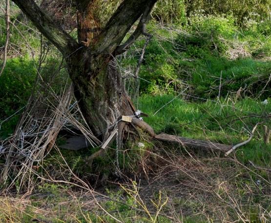 河川敷の木々A