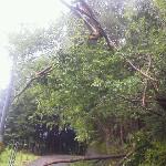 えらいこっちゃ 昨日の台風もどきで倒木。アトリエに行けへんやん
