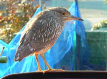 鳥P1730346