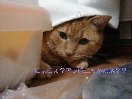 ぷくっと! (1)