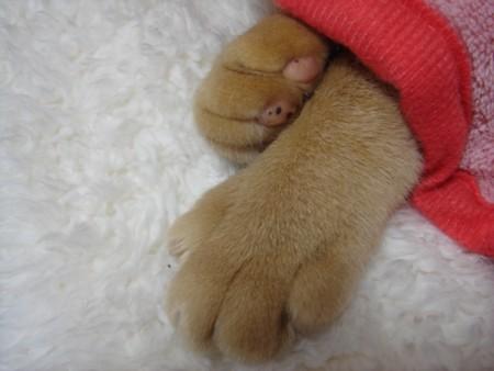手と足? (7)