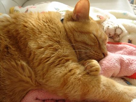 猫は寝子? (4)