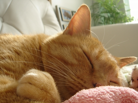 猫は寝子?