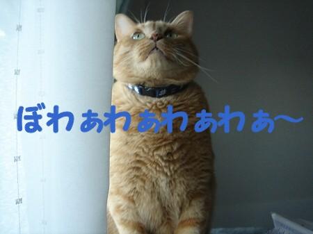 朝一番の? (9)