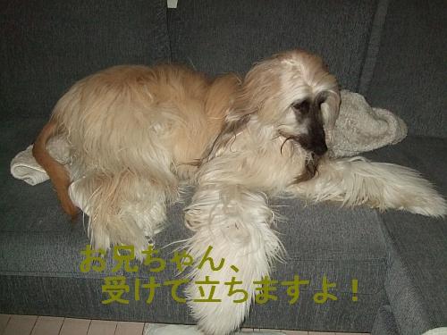 PO20111019_0015.jpg