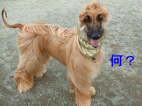 PO20111023_0011.jpg