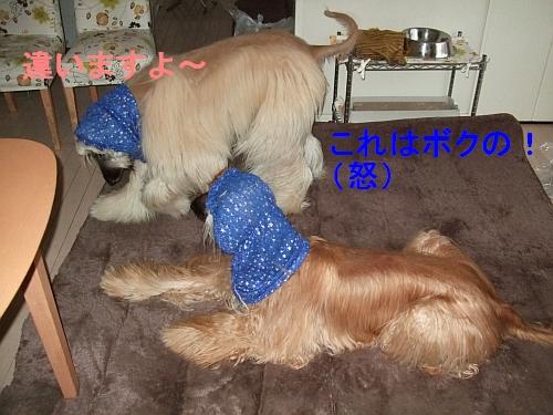 PO20111127_0004.jpg