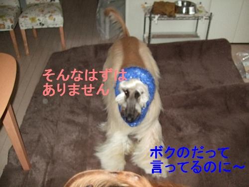 PO20111127_0005.jpg