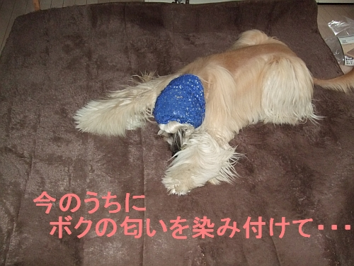 PO20111127_0006.jpg