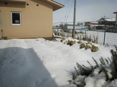 2012畑雪