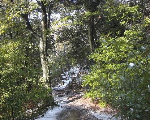常緑樹 066
