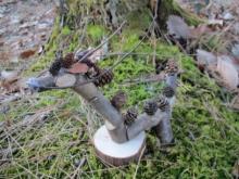 木の実木の枝 龍 (5)