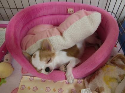 夏のお昼寝