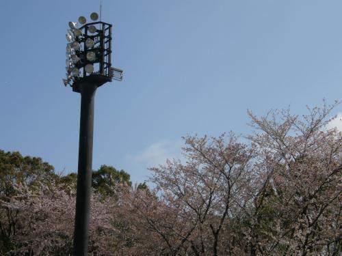2012春季大会桜