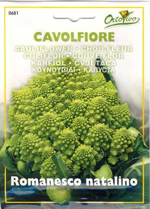 イタリア野菜7