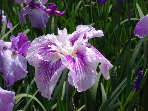 花まつり5