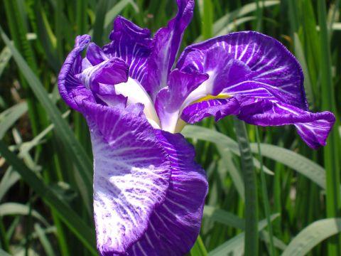 花まつり6