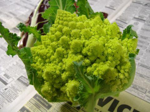 イタリア野菜2