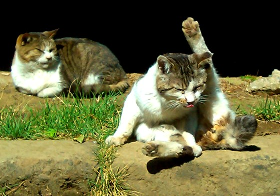 hokekyocats 20130507-11