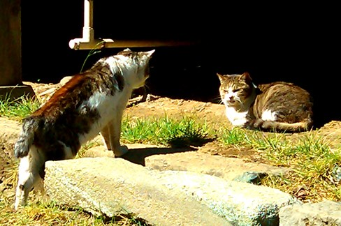 hokekyocats 20130507-6
