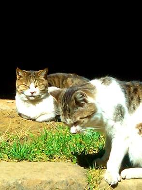 hokekyocats 20130507-7