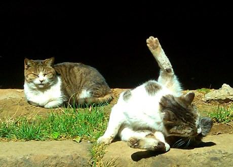 hokekyocats 20130507-8