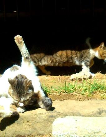 hokekyocats 20130507-9