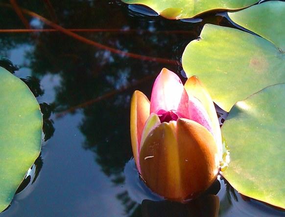 20130603 lotus