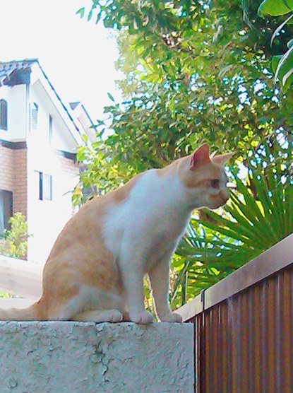 20130603 neighborcat