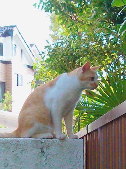 20130603 neighborcat