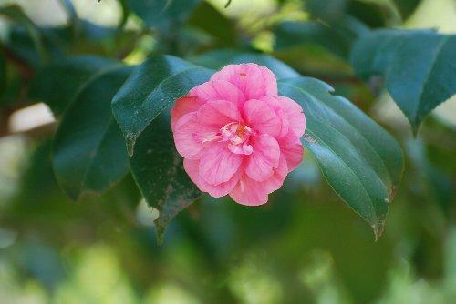 110423 小桜
