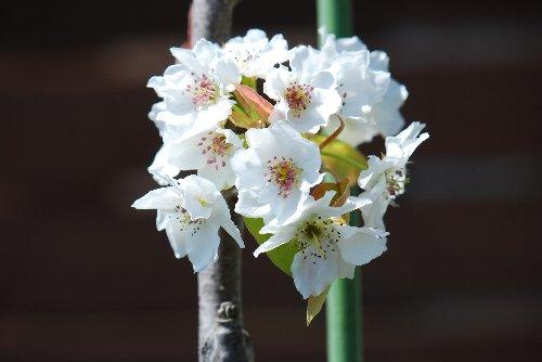 110425 桜