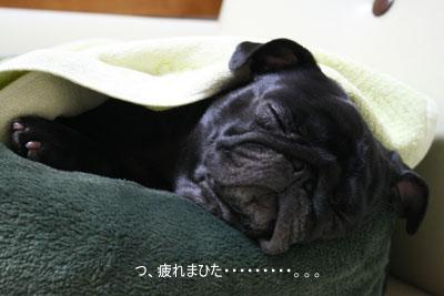 お疲れモード。