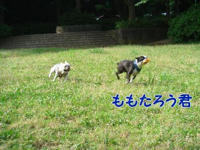 DSC04327.jpg